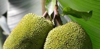 5 Reasons Why Jackfruit Is The Most Amazing Fruit